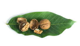 Walnuts and branch with leaves white isolated Stock Photography