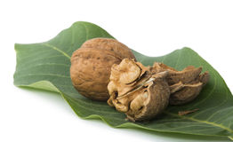 Walnuts and branch with leaves white isolated Royalty Free Stock Image