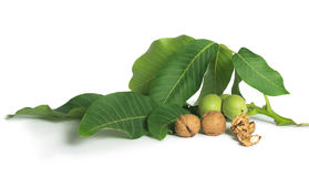 Walnuts and branch with leaves white isolated Stock Photos