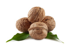 Walnuts are a bunch of illuminated from behind. On white background Royalty Free Stock Photo