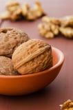 Walnuts in ceramic bowl Royalty Free Stock Image
