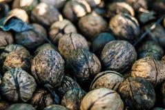 Walnuts. Chest of many walnuts, ready to eat Royalty Free Stock Photography