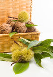 Walnuts  and chestnuts  in a wicker basket. Walnuts and chestnuts in a wicker basket on a white background Royalty Free Stock Photos