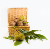 Walnuts  and chestnuts  in a wicker basket. Walnuts and chestnuts in a wicker basket on a white background Stock Photo