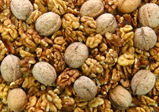 Walnuts. Circassian walnuts background or texture stock images
