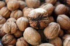 Walnuts Royalty Free Stock Image
