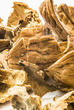 Walnuts - close up vertical shot of shells, marco, cracked Stock Image