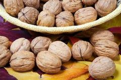 Walnuts close-up Stock Photography