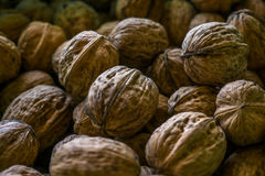 Walnuts. A couple of brown walnuts stock photography