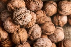 Walnuts on craft loft cloth. Lots of walnuts on craft loft cloth Royalty Free Stock Photos
