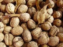 Walnuts and dry leaves. Many walnuts and a few dry leaves stock photo