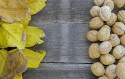 Walnuts and dry leaves on a wooden base. Autumn is here. Dry leaves and ripe fruits are coming. Walnuts  and dry leaves  on a wooden background Stock Photo