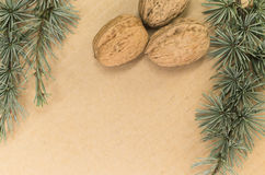 Walnuts and fir twigs Royalty Free Stock Photos