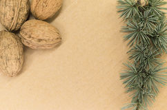 Walnuts and fir twigs Royalty Free Stock Image