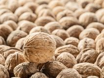 Walnuts. Food background. Royalty Free Stock Photography