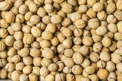 Walnuts fruit in shell background closeup. Lots of nuts. Stock image stock image