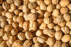 Walnuts Royalty Free Stock Photos