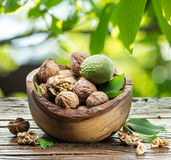 Walnuts in the garden. Royalty Free Stock Photography