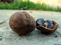 Walnut for the best life royalty free stock photography
