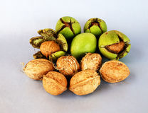 Walnuts on a gray or white background Stock Images