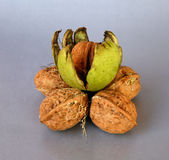 Walnuts on a gray or white background Royalty Free Stock Photography
