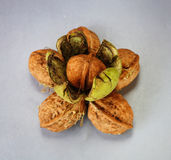 Walnuts on a gray or white background Stock Photos
