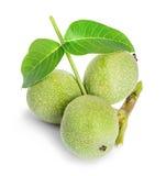 Walnuts green close-up isolated Royalty Free Stock Photo