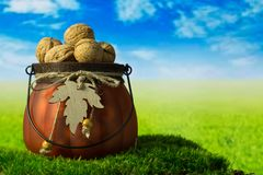 Walnuts in the green decorative pot on the grass. Walnuts in the green decorative pot on the green fantasy landscape Royalty Free Stock Images
