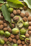 Walnuts. In green husks, close up Stock Photos