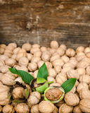 Walnuts in green husks with leaves and walnuts Royalty Free Stock Photos