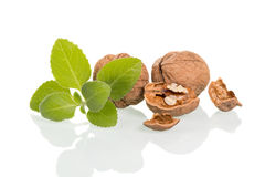 Walnuts with green leaves Stock Photos