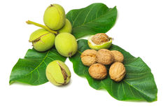 Walnuts with green leaves on a white background Royalty Free Stock Photo