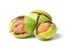 Walnuts in green peel Stock Image