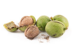 Walnuts in green peel and walnuts in shell on white background Stock Photography