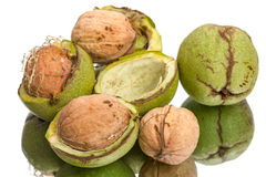 Walnuts and green shell Royalty Free Stock Images