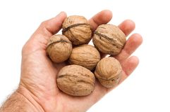 Walnuts in hand Royalty Free Stock Photography
