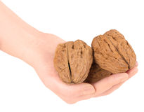 Walnuts in hand    Royalty Free Stock Photos