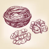 Walnuts hand drawn vector illustration sketch  Stock Photography