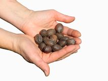 Walnuts in hands Stock Photography