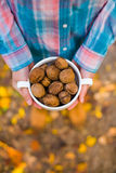Walnuts in the hands of the girls. Stock Photo