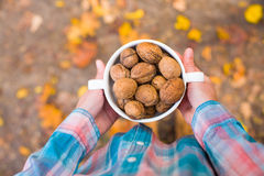 Walnuts in the hands of the girls. Royalty Free Stock Photography