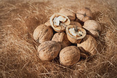 Walnuts and hay, closeup.  Stock Images