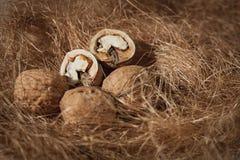 Walnuts and hay, closeup.  Stock Image