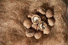 Walnuts and hay, closeup.  Royalty Free Stock Images