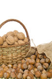 Walnuts and hazelnuts Stock Images