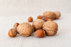 Walnuts and hazelnuts Stock Photo