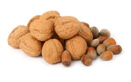 Walnuts and hazelnuts against white Stock Image