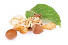 Walnuts, hazelnuts and almonds. Isolated on a white background Stock Images