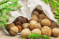 Walnuts with hazelnuts with green fir branches around Stock Photo