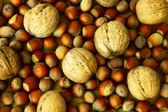 Walnuts and hazelnuts. Walnuts, a large pile, large size Royalty Free Stock Photo